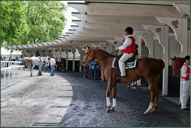 The Paddock Area at Belmont...